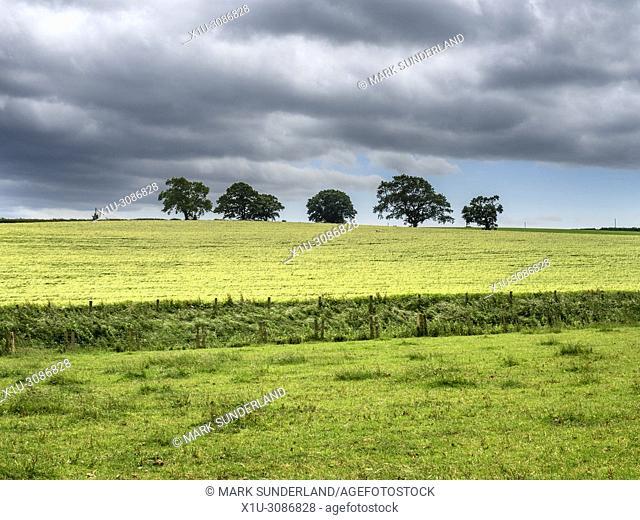 Trees on the horizon on farmland near Studley Park Ripon North Yorkshire England