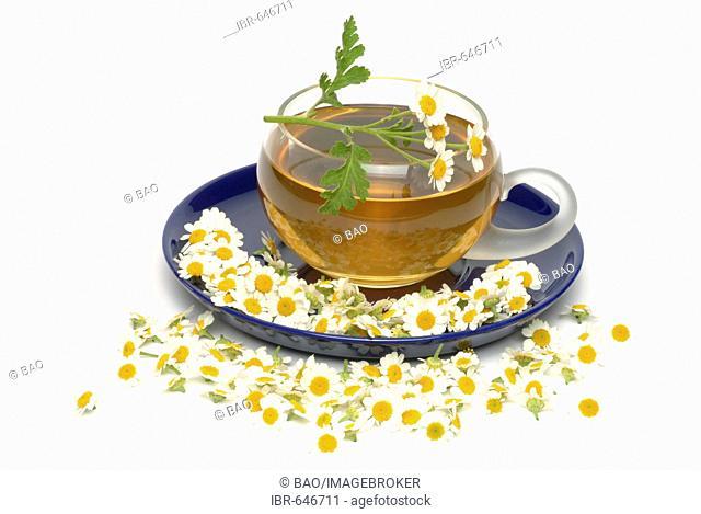 Feverfew (Chrysanthemum parthenium, Tanacetum parthenium), herbal tea, medicinal tea
