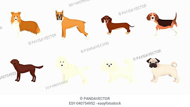 Dog breeds icons in set collection for design.Dog pet vector symbol stock illustration