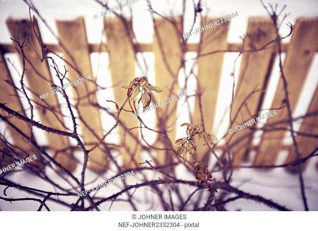 Dead leaves on twigs