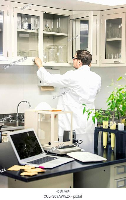 Scientist looking in cupboard at plant growth research centre laboratory