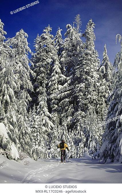 Cross Country skiier, Cypress Mountain, BC