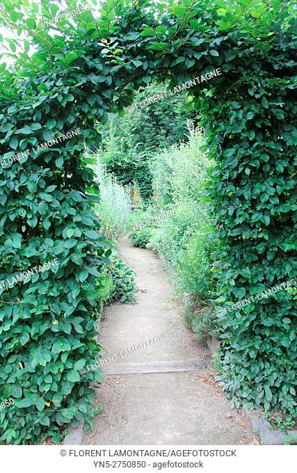 Carpinus betulus: arch in a garden's pathway
