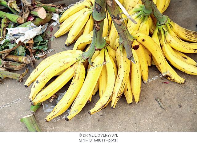 Bananas for sale in market, Stone Town, Zanzibar, Tanzania