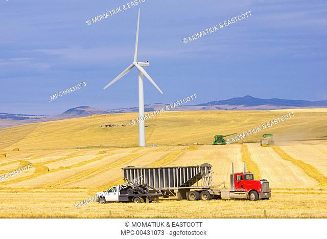 Windmill and trucks collecting harvest in the fields of traditional farming community, Alberta, Canada