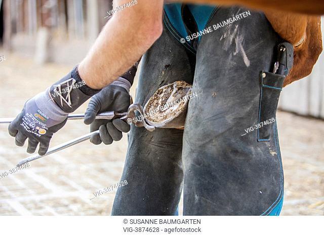 GERMANY, LEVERKUSEN, Farrier cuts a hoof toe with a horseshoeing nippers. - LEVERKUSEN, NORTH RHINE-WESTPHALIA, GERMANY, 19/04/2013