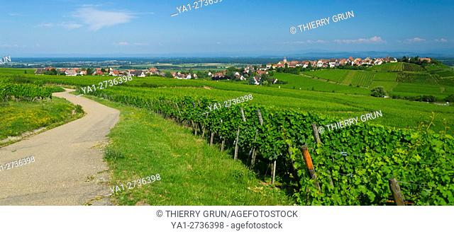 France, Haut-Rhin (68), Wine road, Zellenberg, vineyards and village during summer