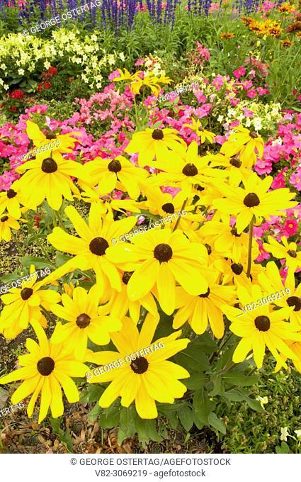 Black-eyed Susans, Finch Arboretum, Spokane, Washington