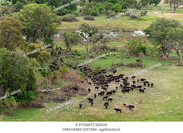 Botswana, Okavango delta, listed as World Heritage by UNESCO, African buffalos (Syncerus caffer (aerial view)