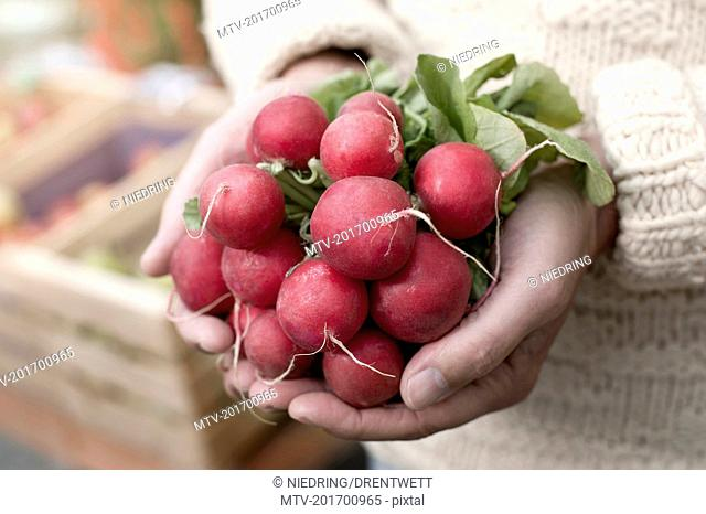 Mid section of a man holding red radish in his hands in front of wholefood shop, Bavaria, Germany