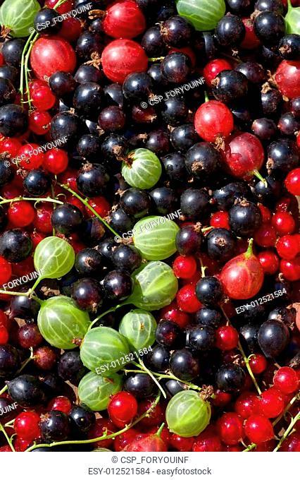 fresh berrys