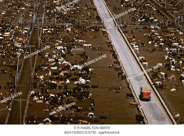 Livestock - High view of a large beef feedlot / TX - nr. Lubbock
