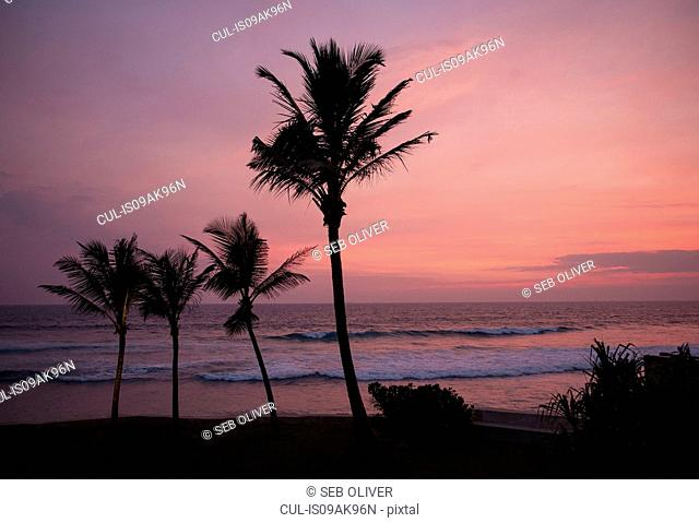 Beach and palm trees at sunset, Galle, Sri Lanka