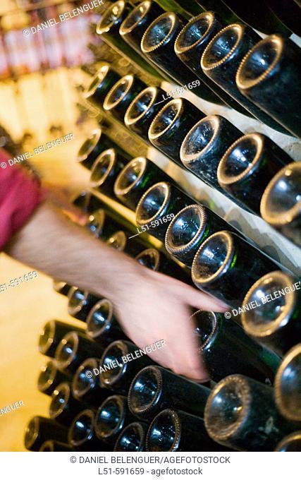 Turning sparkling wine bottles in cellar. Requena-Utiel, Valencia province, Comunidad Valenciana, Spain