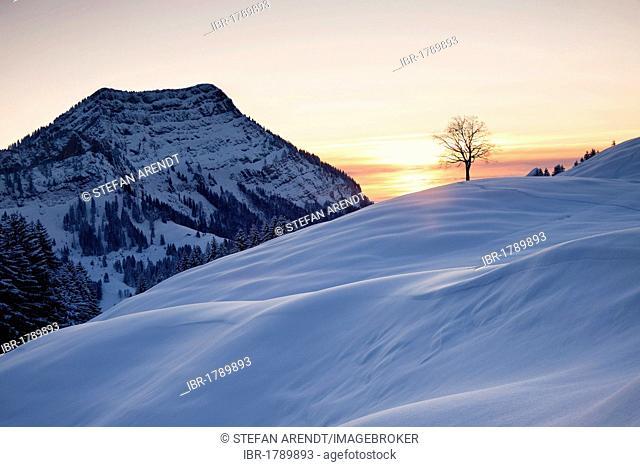 Evening scene in winter, Stockberg mountain and a tree, Alpstein massif, Swiss Alps, Switzerland, Europe