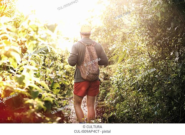 Rear view of young man hiking in rain forest at Lake Atitlan, Guatemala