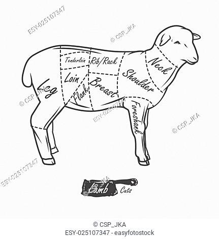 Lamb Shank Diagram