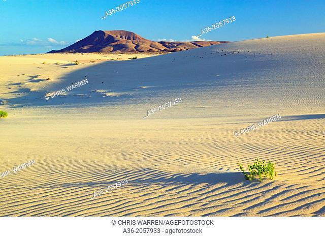 Grandes Playas Corralejo Fuerteventura Canary Islands Spain