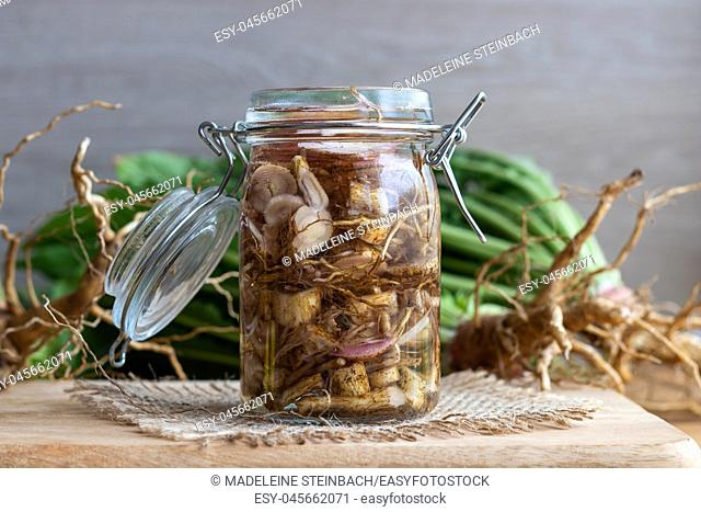 Preparation of alcohol tincture from fresh evening primrose root