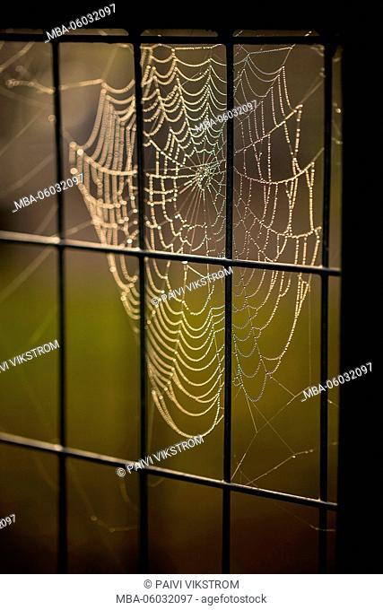 Cobweb hanging on the fence