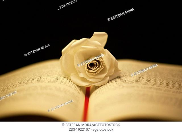 Opened book with a flower