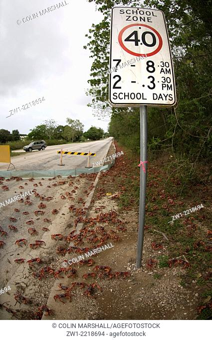 Red Crabs (Gecarcoidea natalis) by sign in Christmas Island in Australia