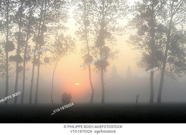 France, Normandy, Manche, bocage, sunrise in the midst