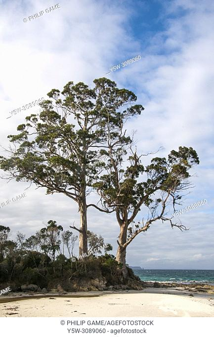 Two Tree Point, largely unchanged since the landing by Tobias Furneaux in 1792, on Resolution Creek at, Adventure Bay, Bruny Island, Tasmania, Australia