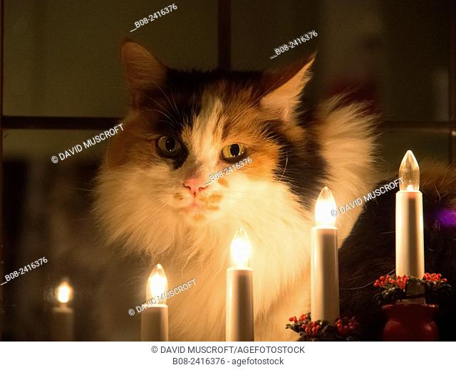a cat by candlelight in a home, UK