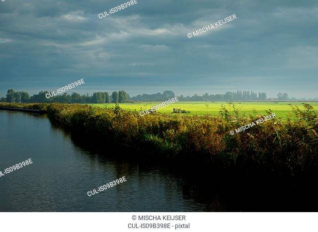 Meadows and reed in Frisian lake district, Netherlands
