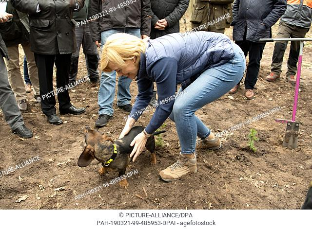 21 March 2019, Brandenburg, Nauen: Federal Minister of Agriculture Julia Kl·ckner (CDU) strokes Dackel Ulan during a press conference in a forest of the Federal...