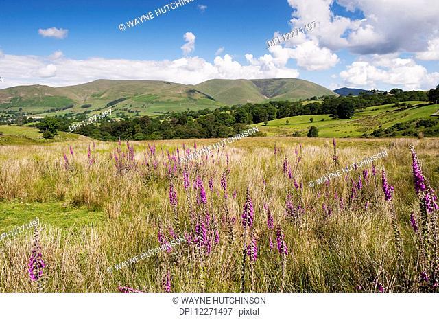 Eastern Howgill fells near Sedbergh; Cumbria, England
