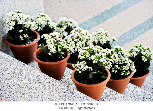 Three Rows of White Flowered Plants on Terrazo steps