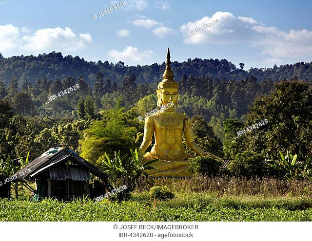Golden Buddha statue in the jungle, hills, Wiang Pa Pao, Chiang Rai Province, Thailand