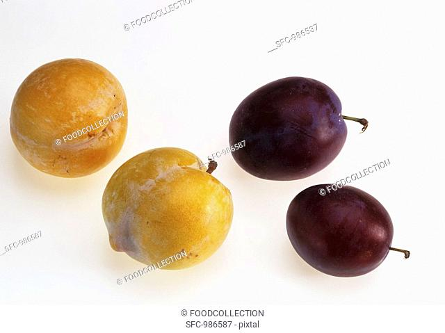 Two yellow plums and two purple plums
