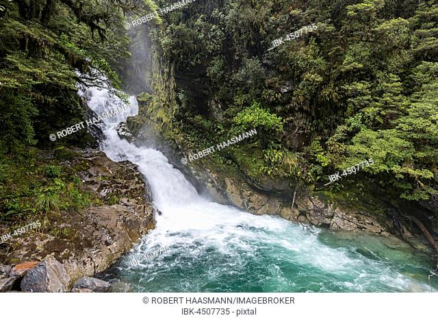 Falls Creek Waterfall, Milford Highway, rainforest, Fiordland National Park, Southland, New Zealand