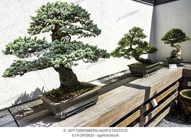 Washington DC, District of Columbia, United States National Arboretum, botanical garden, Bonsai and Penjing Museum, miniature, trees