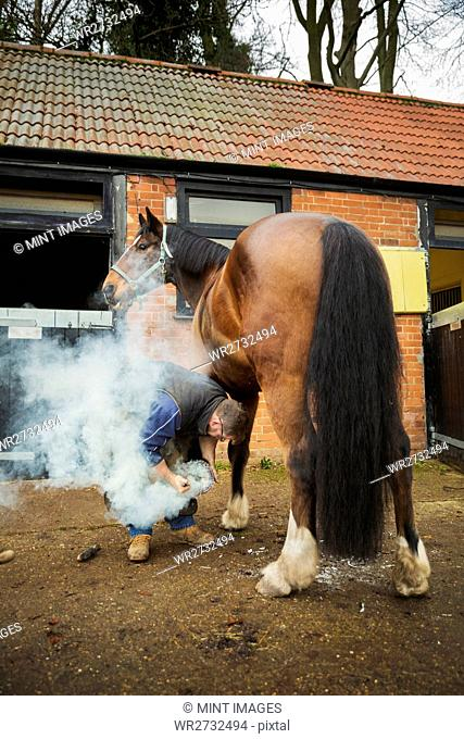 A farrier shoeing a horse, bending down and fitting a new horseshoe to a horse's hoof. Steam from the hot metal