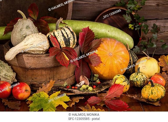 Autumn Still Life with Pumpkins, Gourds and Corn