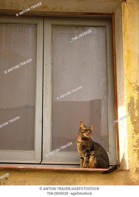 Cat in the window, Lleida