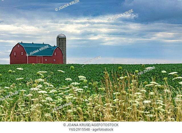 A North american barn with a silo in summer