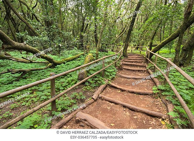 Rain forest in Garajonay national park , La Gomera, Canary islands, Spain