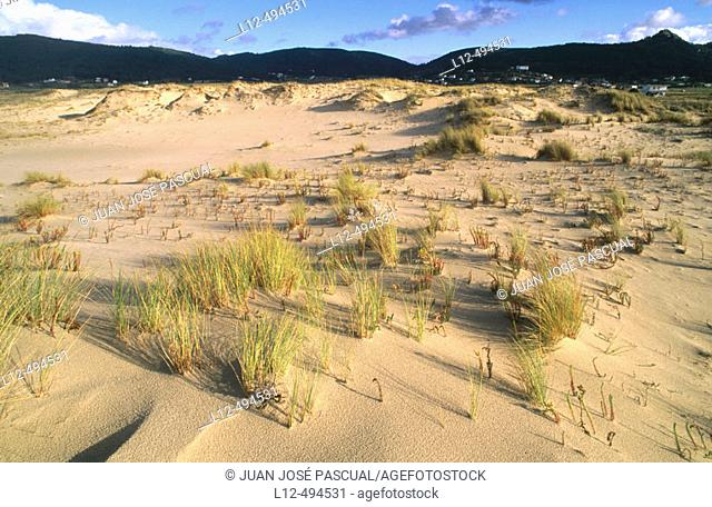 Dunes and vegetation on Traba beach, Costa da Morte. La Coruña province, Galicia, Spain