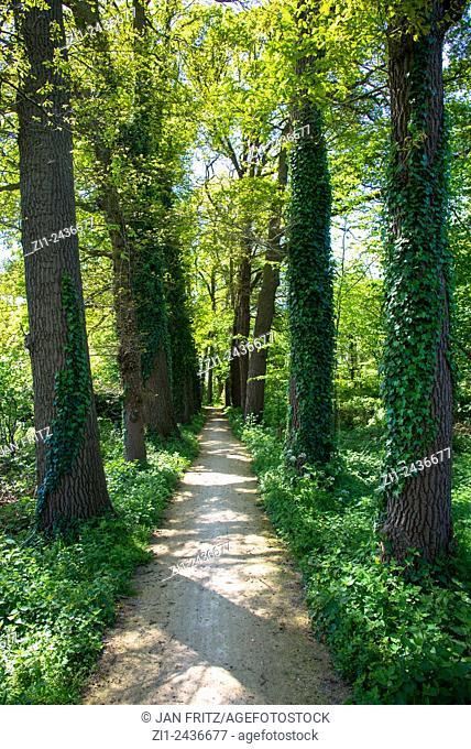 small bicycle path with huge trees in holland