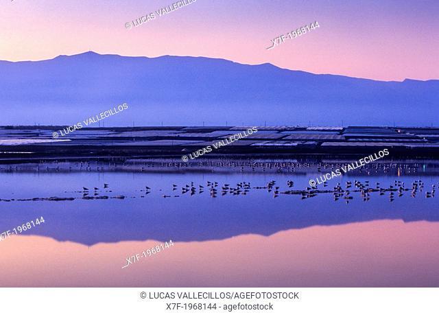 `Charca salinas viejas', Paraje Natural Punta Entinas-Sabinar, Roquetas de Mar.Almeria province, Andalucia, Spain
