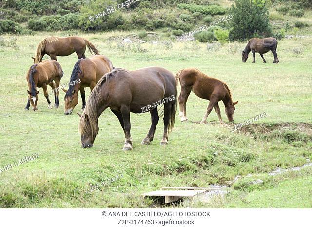 Wild horses Boi valley Lleida Catalunya Spain