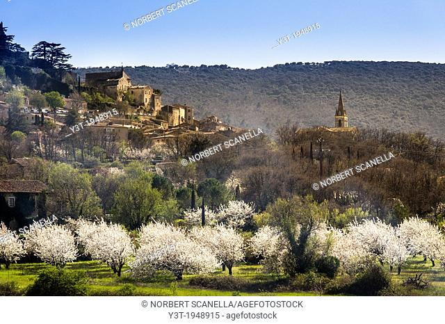 Europe, France, Vaucluse, Luberon. Cherry blossoms at the perched village of Bonnieux