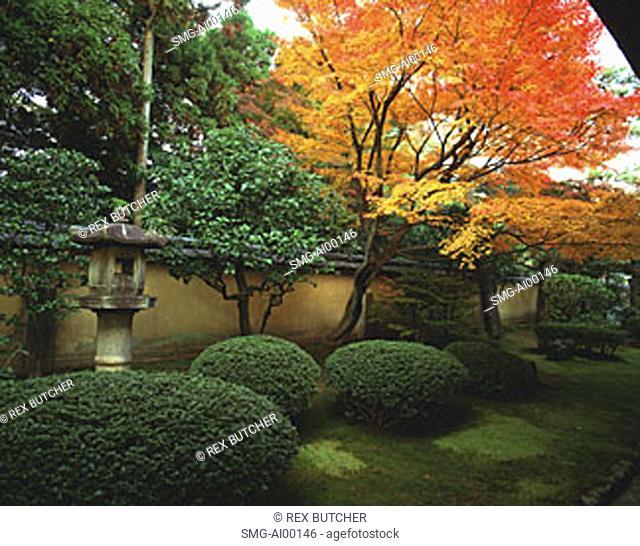 Japan, Kyoto, Kohrin-in, Daitoku-ji sub-temple, garden with maple