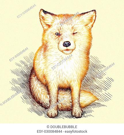 engrave isolated fox illustration sketch. linear art