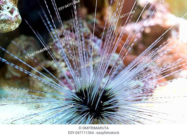 Sea urchin in the depths of the sea